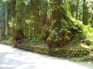 日光東照宮の森